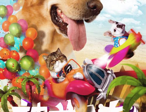 《神犬小七第二季》