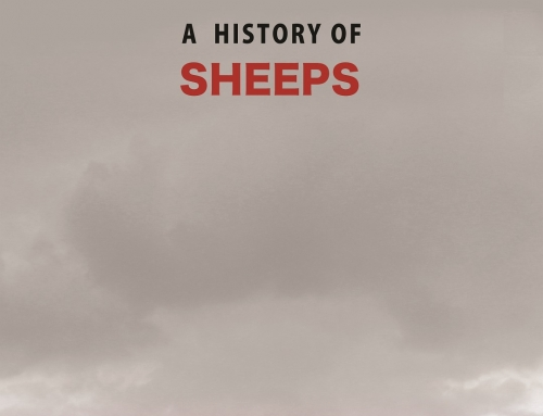 A history of sheeps